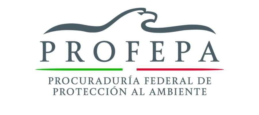 PROFEPA presenta denuncia penal por tala y relleno de humedal en San Felipe, Yucatán