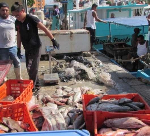 Fatídico 2019 vivió el sector pesquero