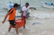 La SSP devuelve pepino de mar a pescadores de Chicxulub