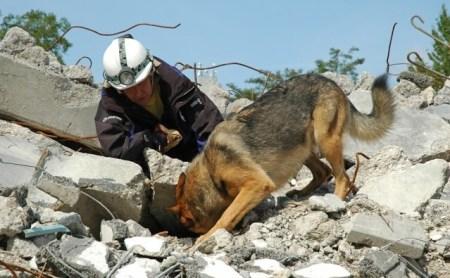 perros-rescate