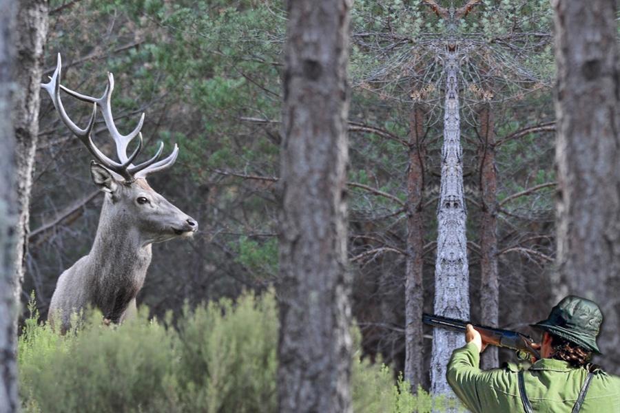 ¿Se debe prohibir la caza en España?