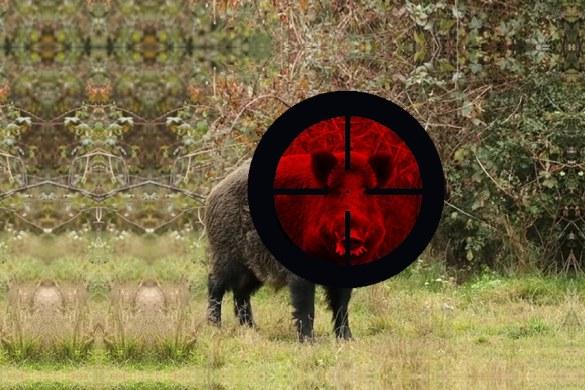 Estás de acuerdo en blindar la caza en España