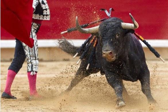 Como ya es habitual hemos realizado la siguiente pregunta sobre la tauromaquia española y te invitamos a participar: ¿Estás de acuerdo en prohibir las corridas de toros en España?