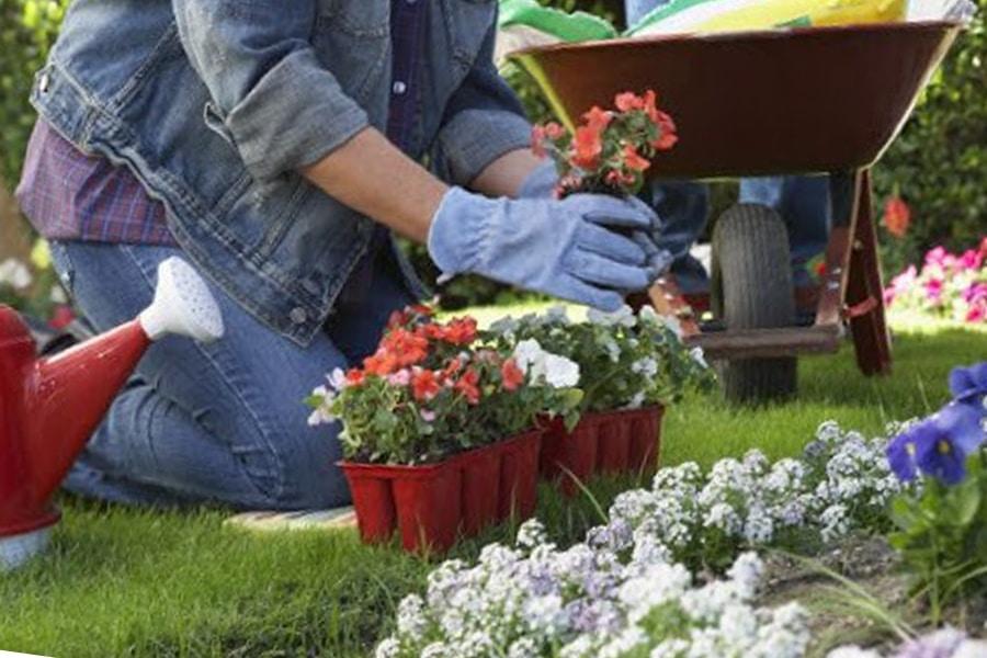 Consejos para el buen mantenimiento de tu jardín