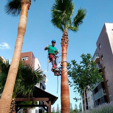 Las palmeras, las plantas ornamentales por excelencia