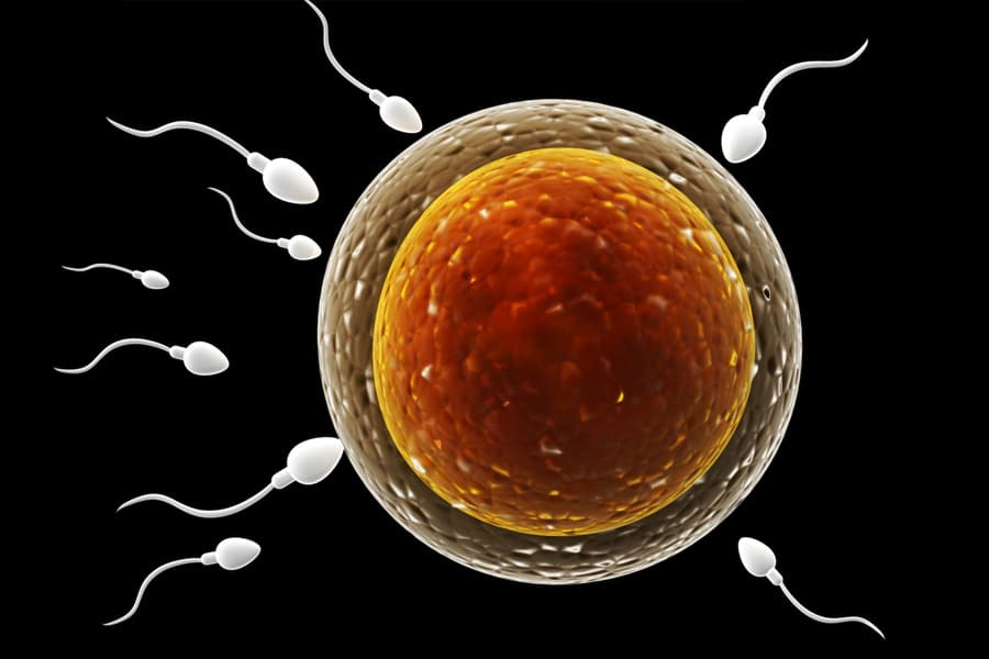 La criopreservación de óvulos es la fórmula para ser madre