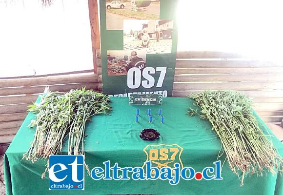 El OS7 de Carabineros incautó las 230 plantas en proceso de cultivo al interior de una vivienda en el sector rural de la comuna de Llay Llay, además de marihuana elaborada y municiones de escopeta.