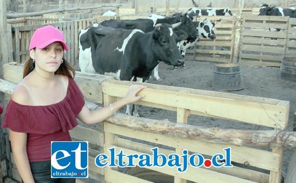 JOVEN GANADERA.- Claudia Pérez es una joven sanfelipeña que cuida de los animales que sobrevivieron.
