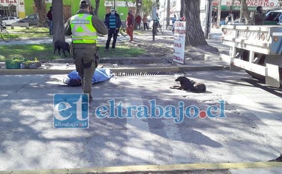 Una imagen vale más que mil palabras, acá se puede ver a uno de sus perritos echado frente al cuerpo de su amo.