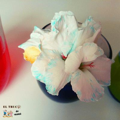 Actividades con semillas y flores