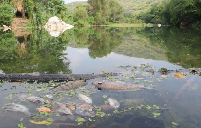 CNDH: emite recomendación por contaminación de Río