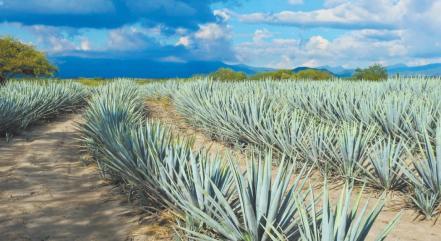 mezcal_y_tequila6.jpg