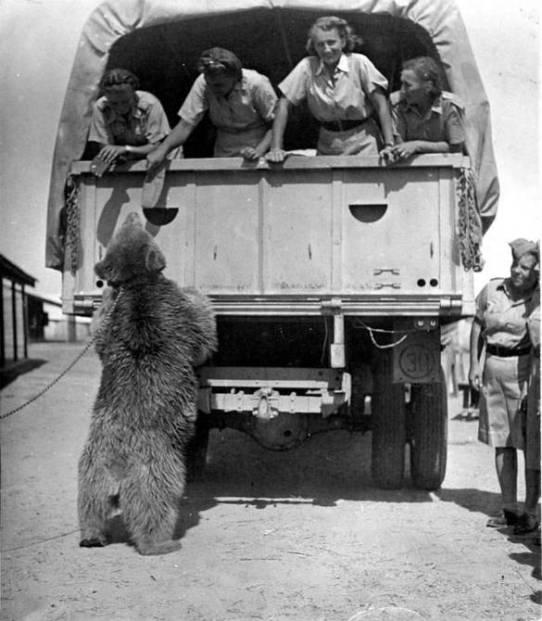 Wojtek, el oso que combatió contra los nazis. Autor: Imperial War Museum, 1942. Fuente: iwm.org.uk