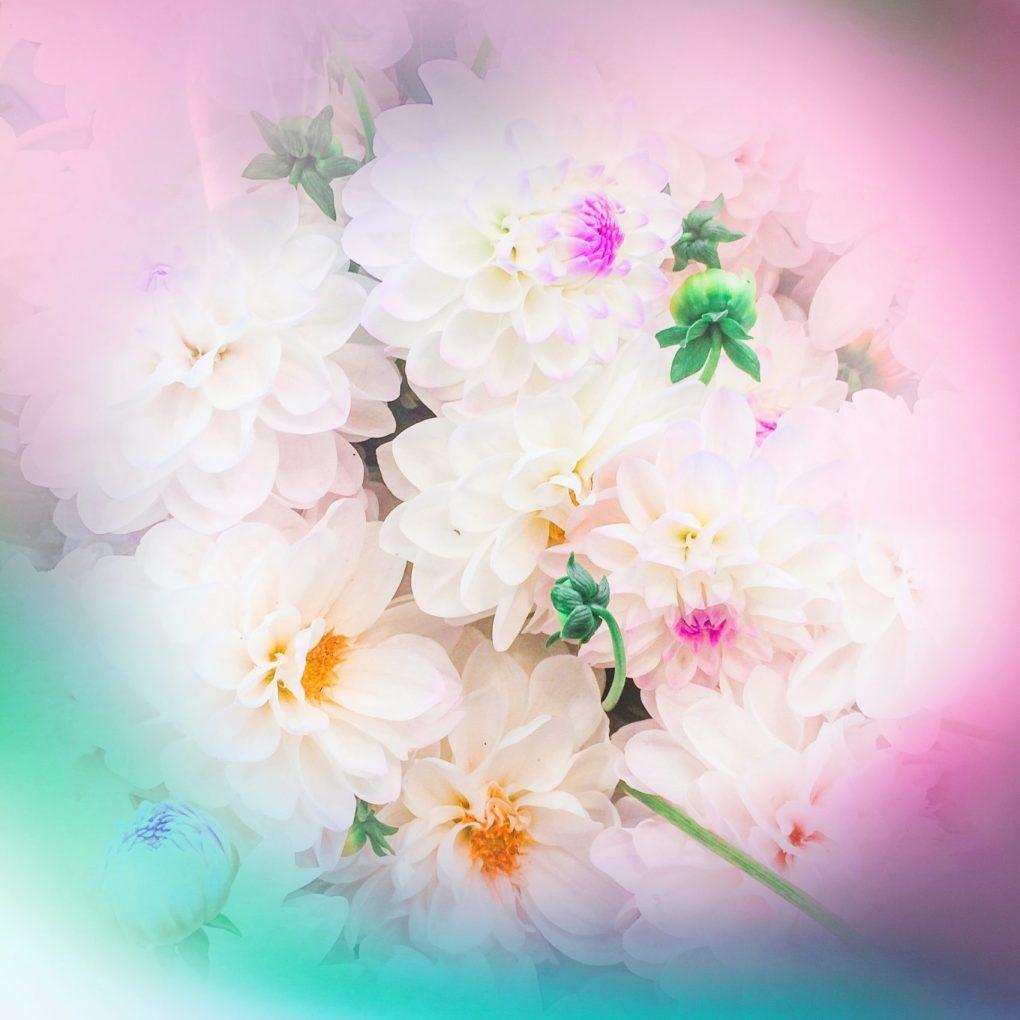 flowers1IMG_9946