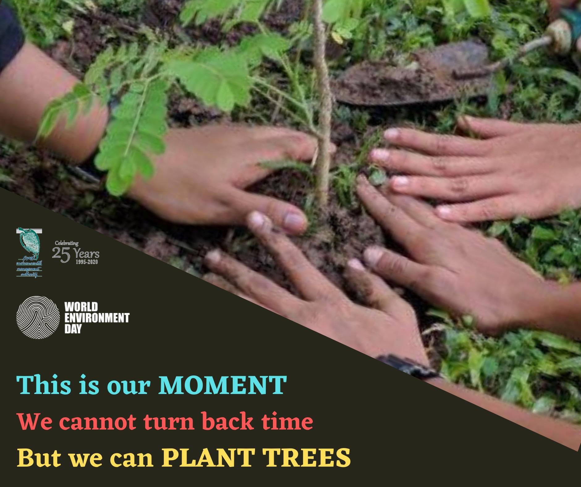 WED - Tree planting