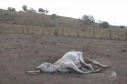 seca na regiao cacaueira
