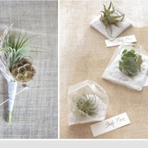 Air Plant Weddings Archives