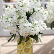 Country Chic, Lemon And Country Chic Weddings On Emasscraft Org