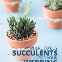 Where To Buy Succulents For Your Wedding