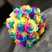 Rainbow Roses Tori Would Love!!
