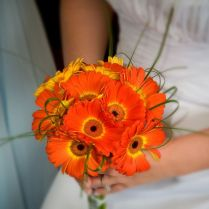 17 Best Ideas About Gerbera Daisy Wedding On Emasscraft Org
