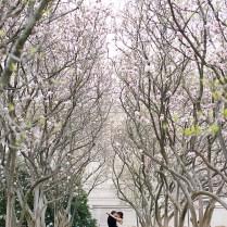 Cherry Blossom Dc Wedding Portraits 550x855 Dc Courthouse Wedding