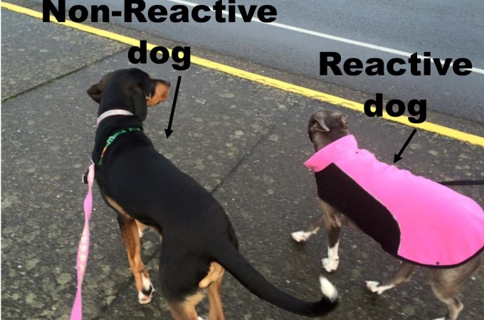 How do I get my dog to stop barking and lunging at x, y, & z while on the leash?