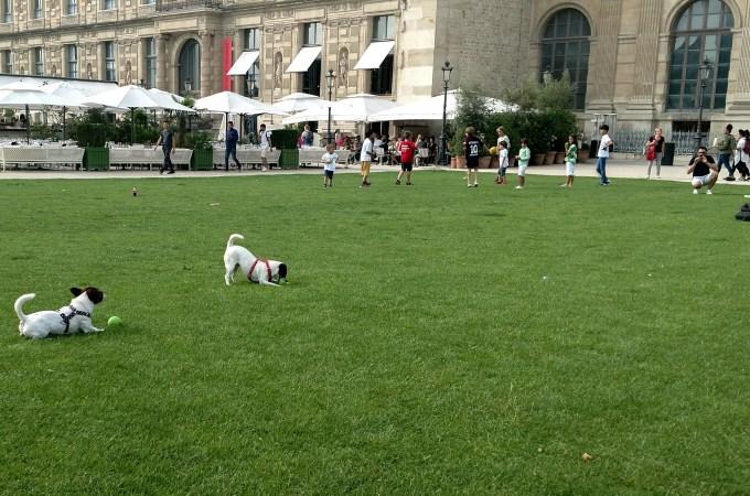 Dogs in Public