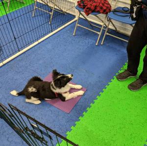 puppy classes bellingham wa quests
