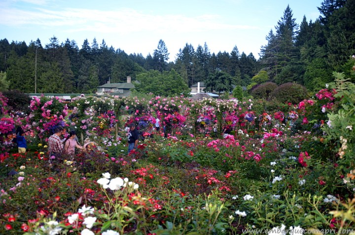 The Butchart Gardens Rose Garden verão 2