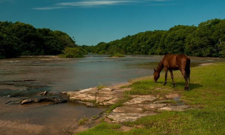 Pernambuco rural