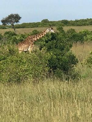 Recap of my Kenya Safari