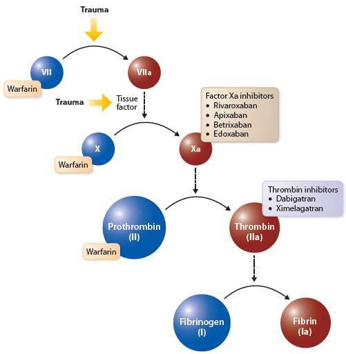 Warfarin & NOACS