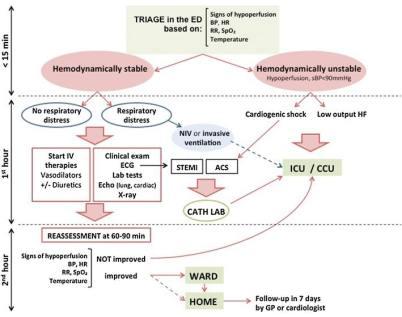 Acute Heart Failure & Cardiogenic Shock