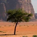 trees-in-the-desert-1365434