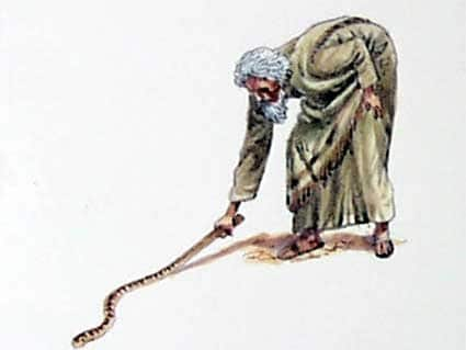 Powerful Can't Miss Lessons on the Rod of God - emeryhorvath.com