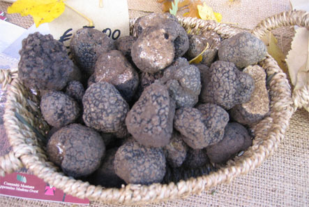 truffle experience in Itay - guided hunts in Italy