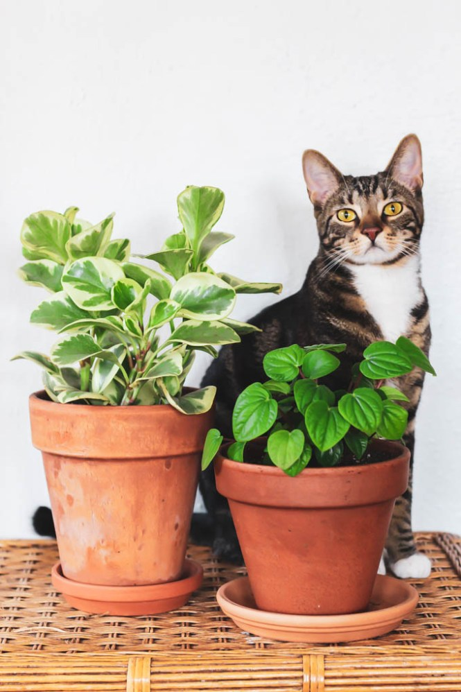 The Best Pet Friendly Houseplants