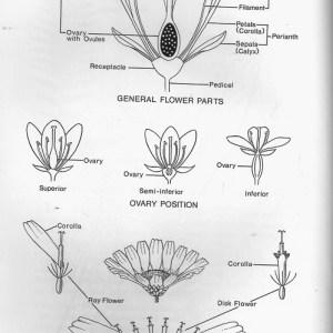 Whitney Field Guide 05