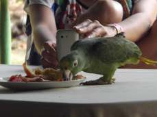 A parrot joined us for breakfast