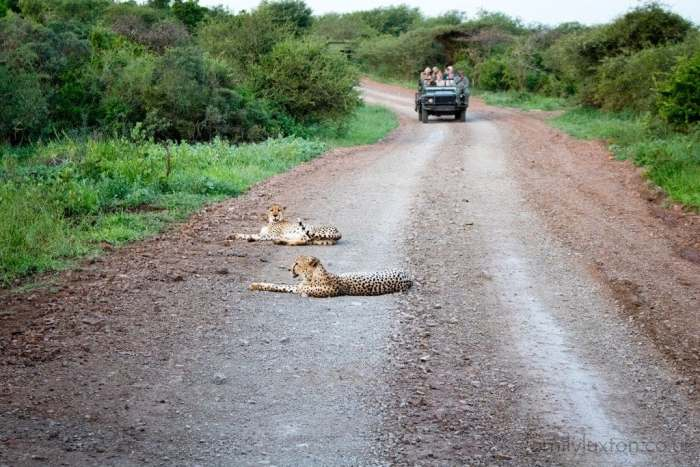 Thanda Safari KwaZulu-Natal