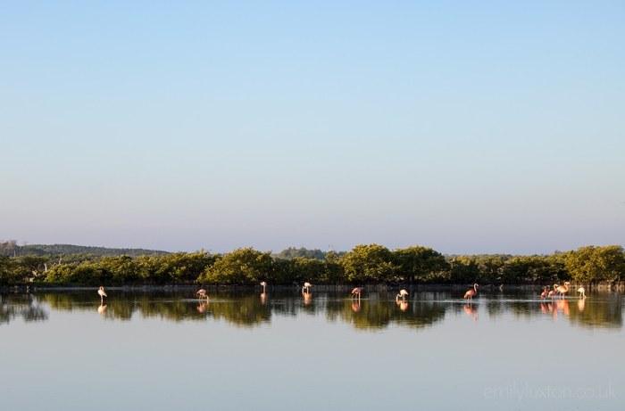 Río Lagartos Mexico