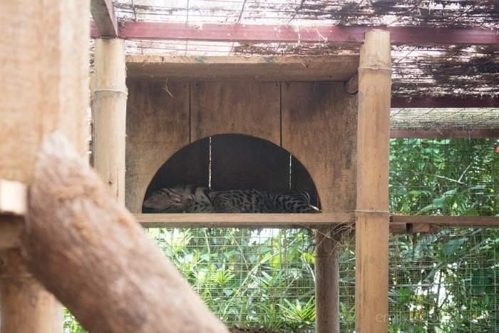Jaguar Rescue Center Puerto Viejo