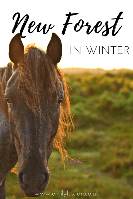 New Forest Winter Adventures