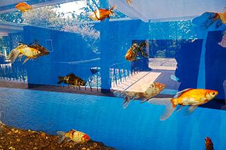 Photo Fish Shanghai Zoo
