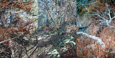 No. 13, Reverie, Landscape Triptych