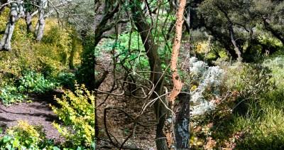 No. 2, Reverie, Landscape Triptych