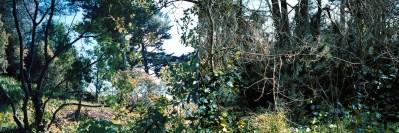 No. 6, Reverie, Landscape Diptych