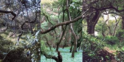 No. 4, Reverie, Landscape Triptych