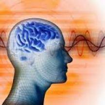 quantum cerveau